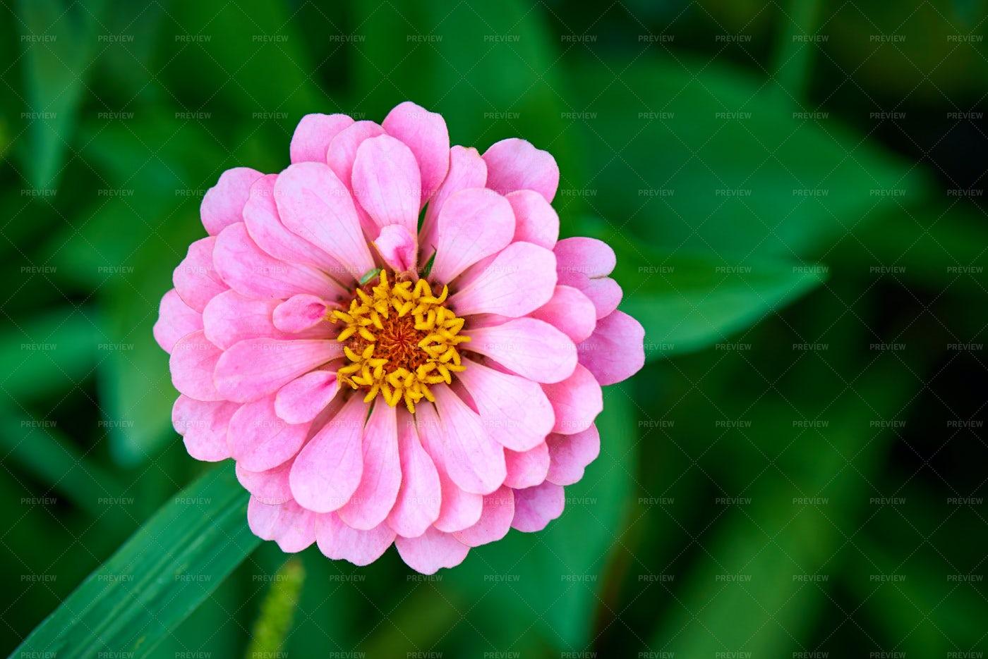 Pink Blossom: Stock Photos
