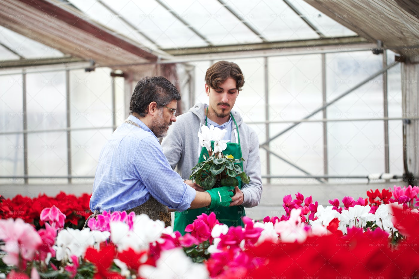 Working In A Plant Nursery: Stock Photos