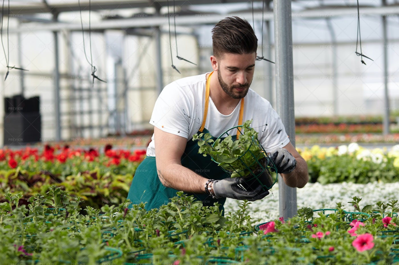 Florist In A Plant Nursery: Stock Photos