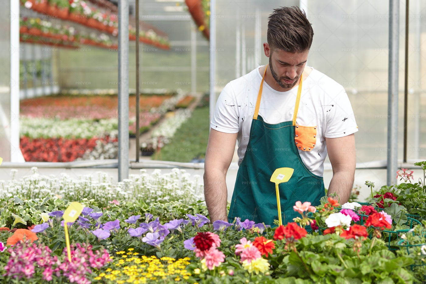 Man Working In A Plant Nursery: Stock Photos