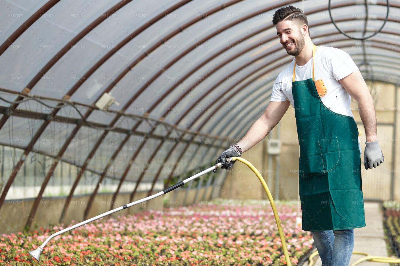 Worker Watering Plants: Stock Photos