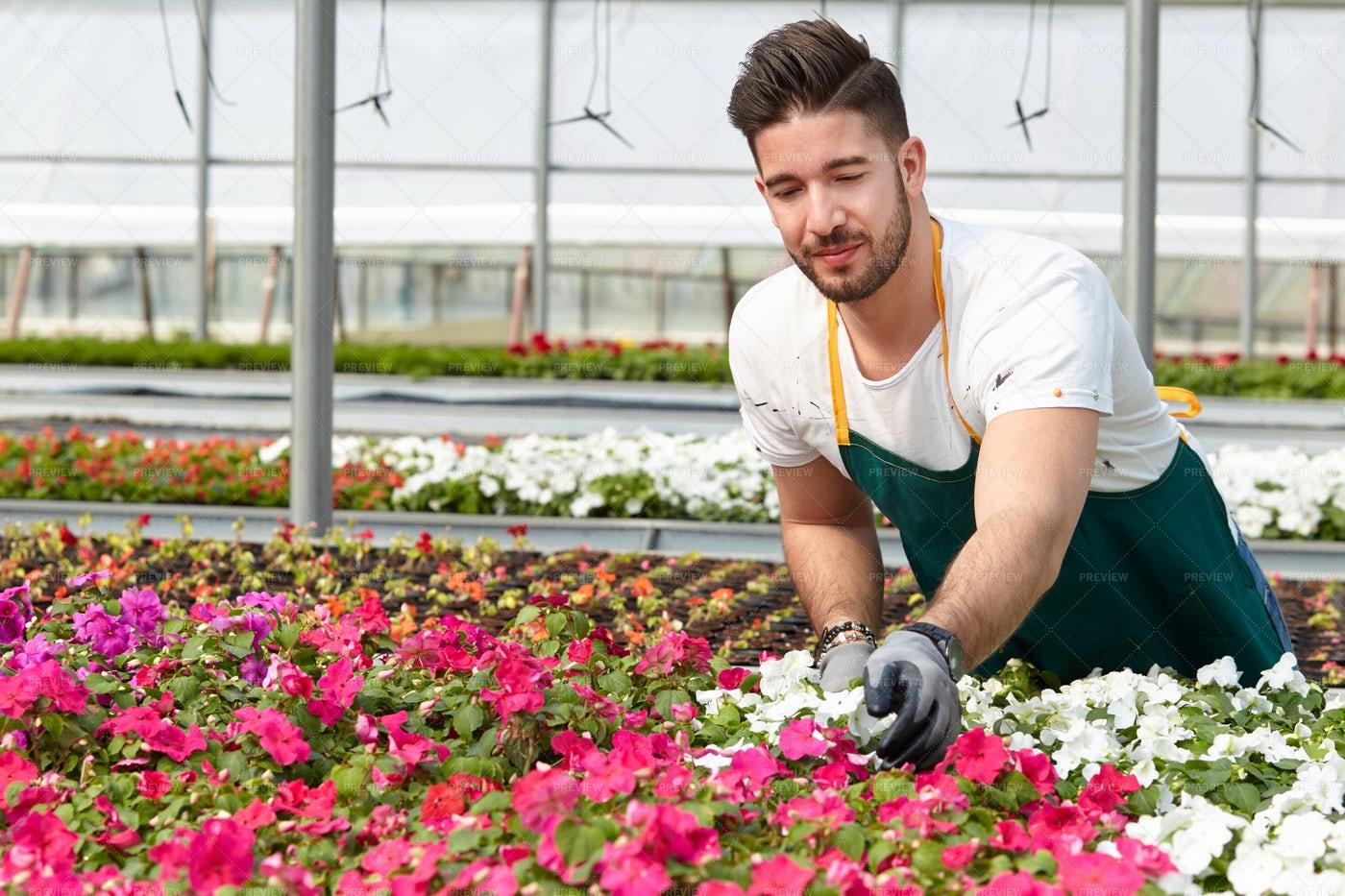 Guy Working On A Garden: Stock Photos