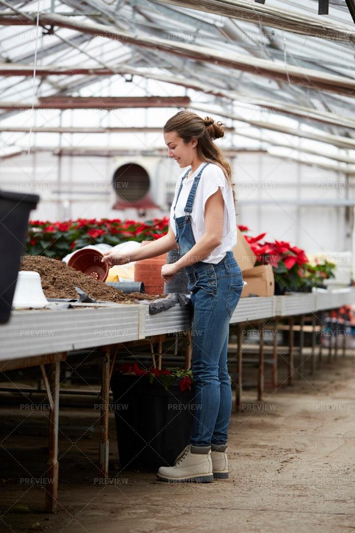 Transplanting Flowers: Stock Photos