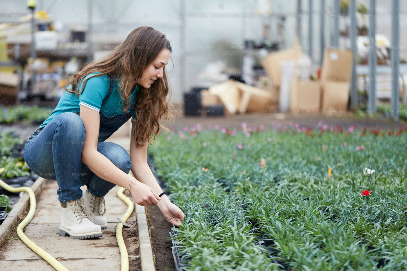 Working In A Flower Greenhouse: Stock Photos