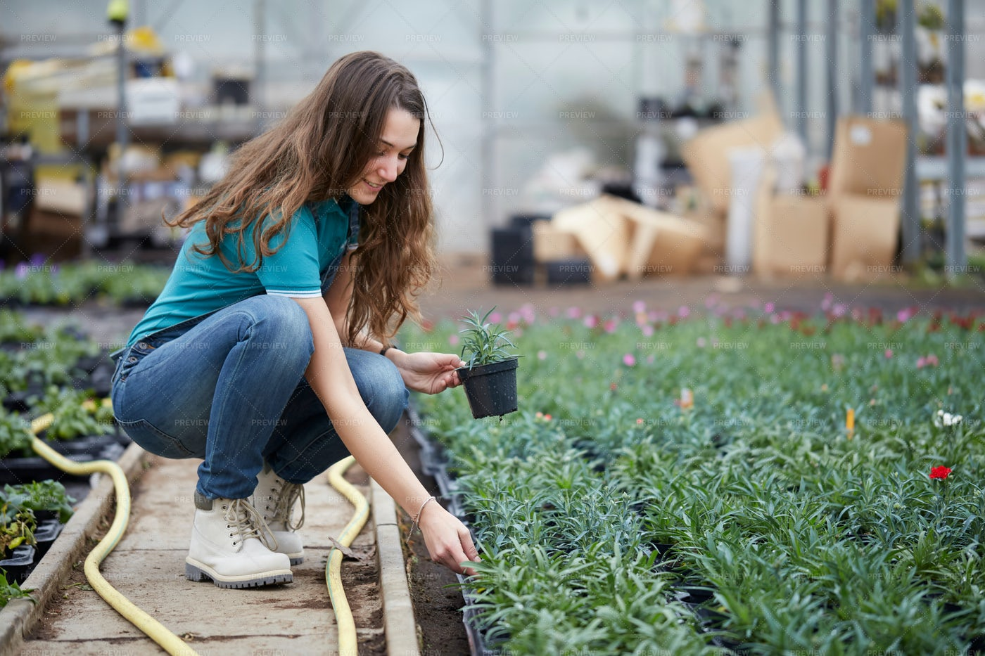 Woman Working In A Plant Nursery: Stock Photos