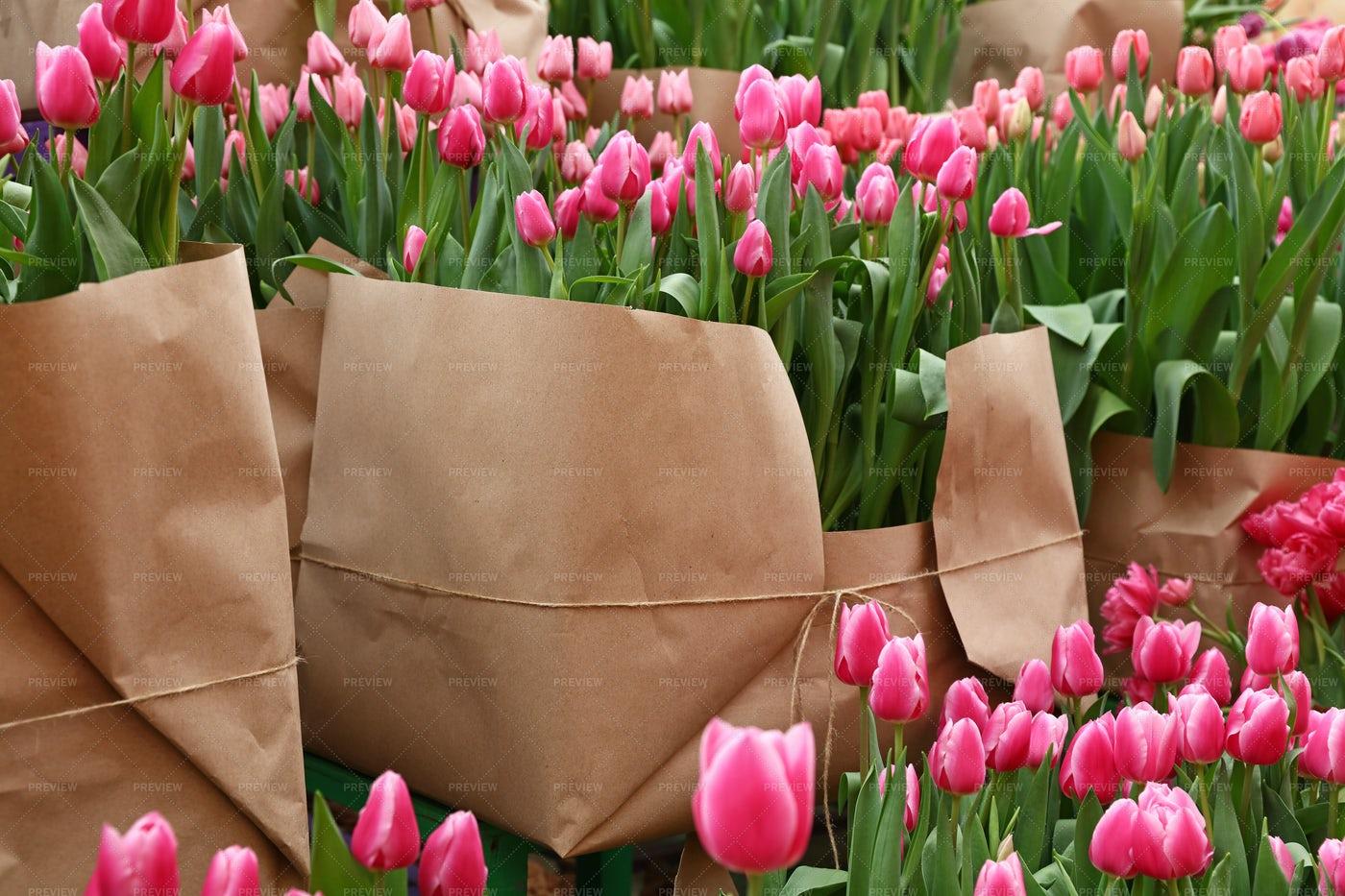 Tulip Flowers For Sale: Stock Photos