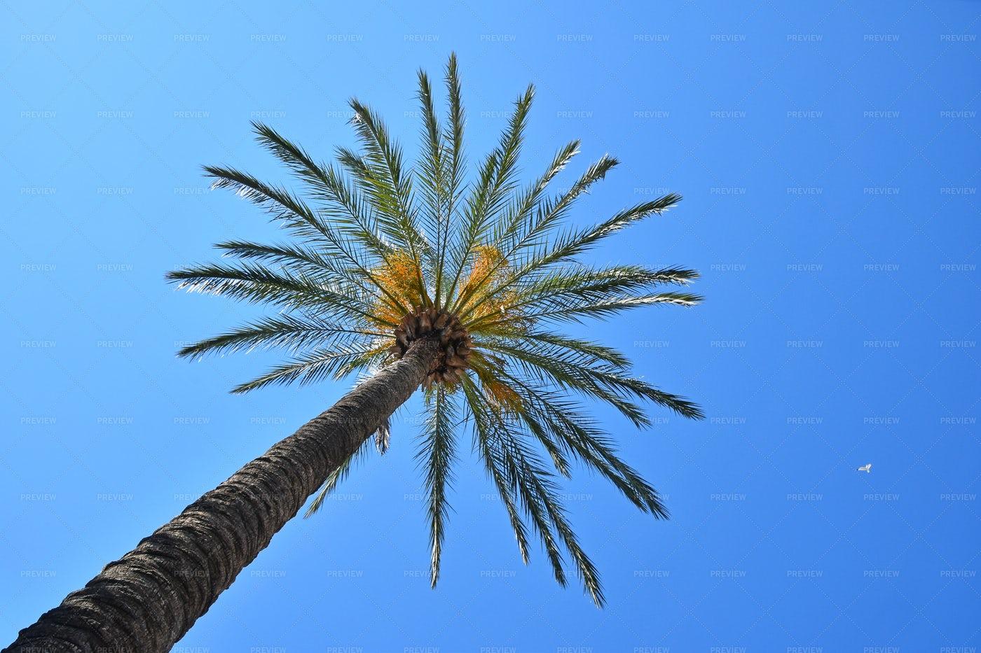 Palm Tree Over Blue Sky: Stock Photos