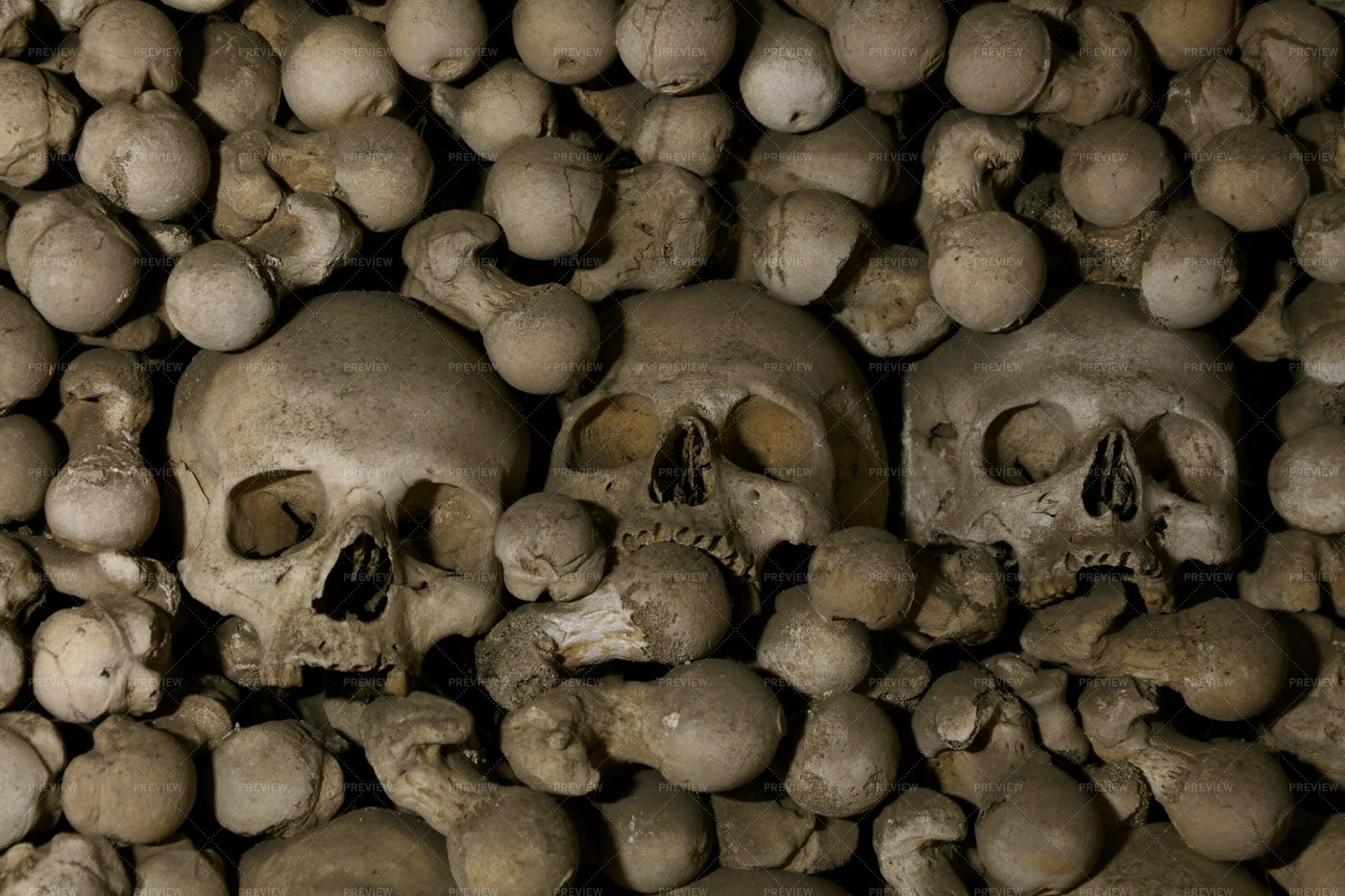 Old Human Skulls And Bones: Stock Photos
