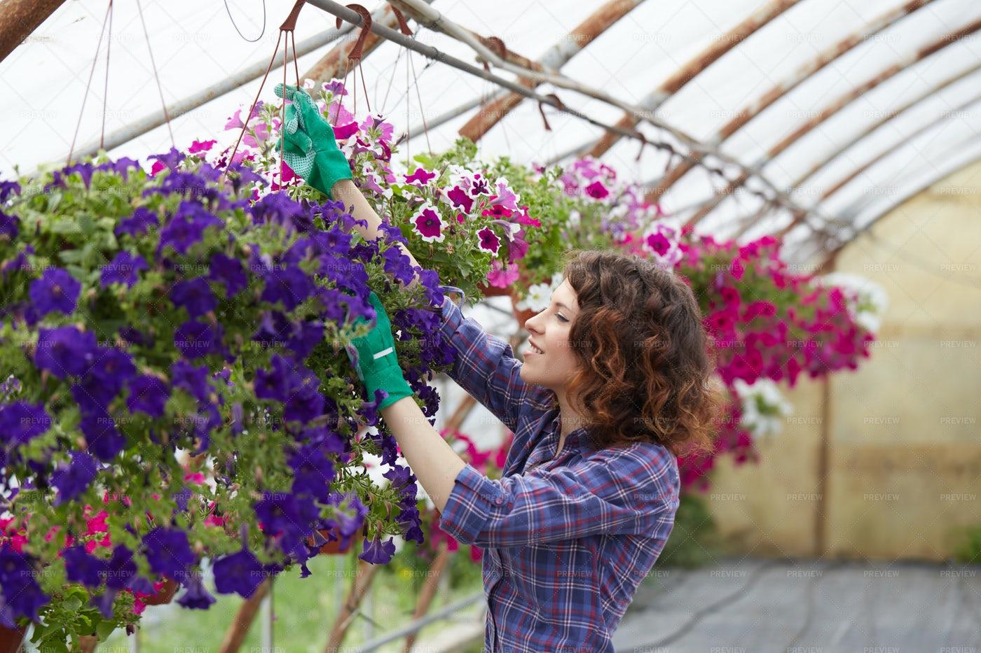 Florist Taking Care Of Her Garden: Stock Photos