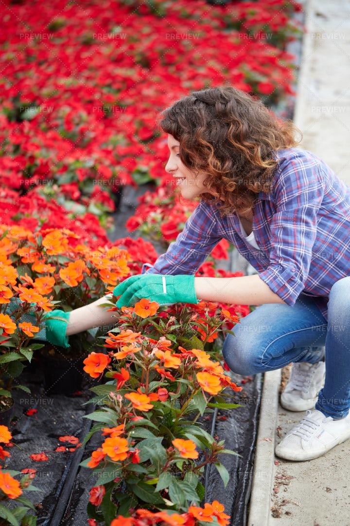 Woman In A Flower Nursery: Stock Photos