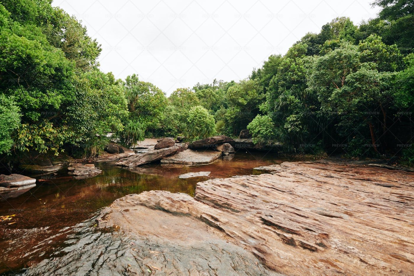 Beautiful Backwater In Forest: Stock Photos