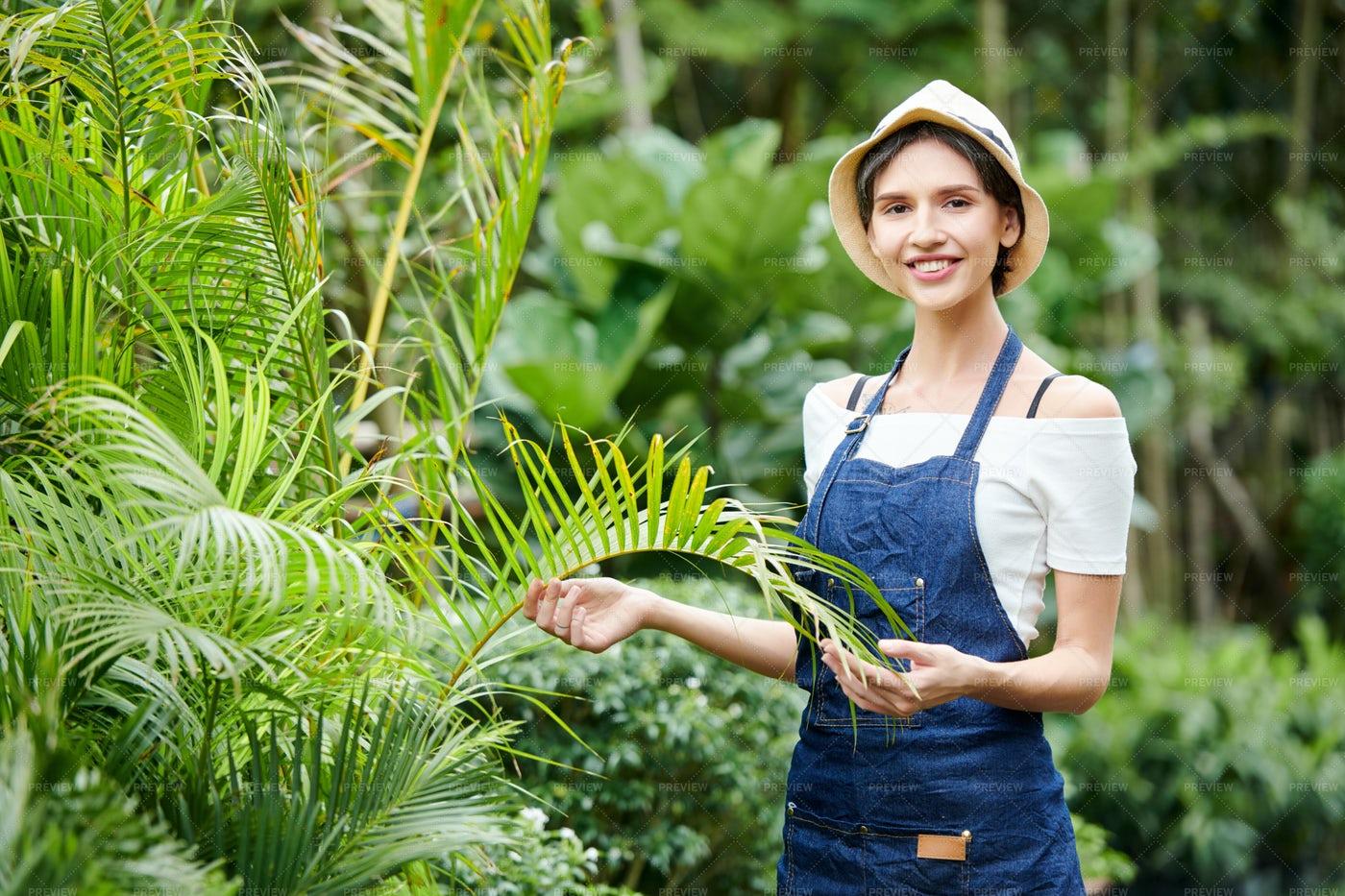 Woman Working In Tropical Garden: Stock Photos