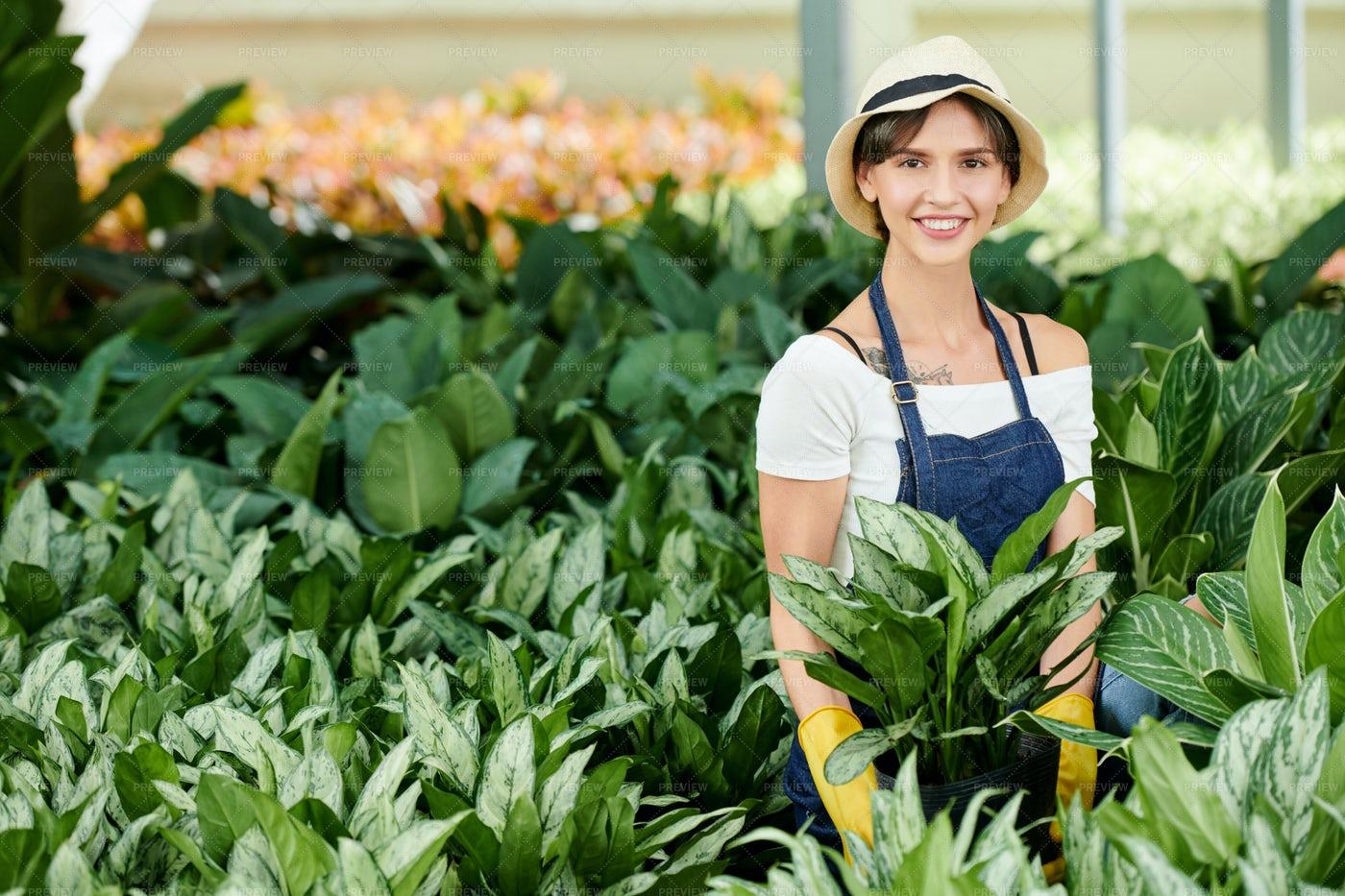Female Gardener Planting Flowers: Stock Photos
