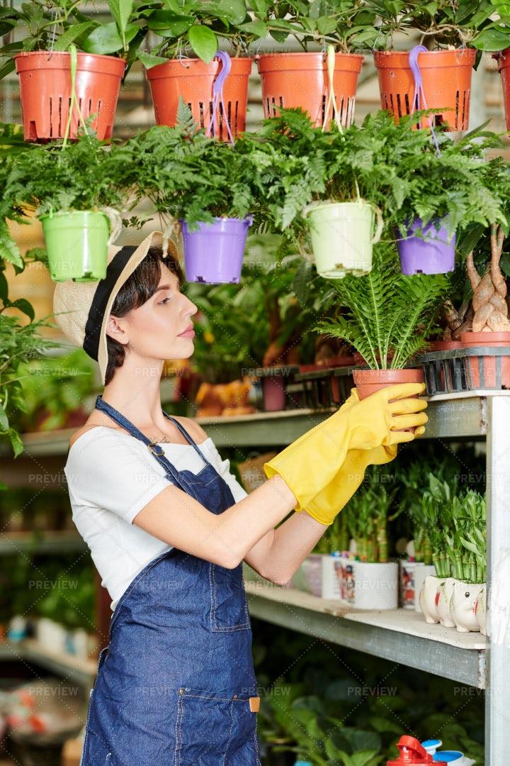 Working Plants Seller: Stock Photos