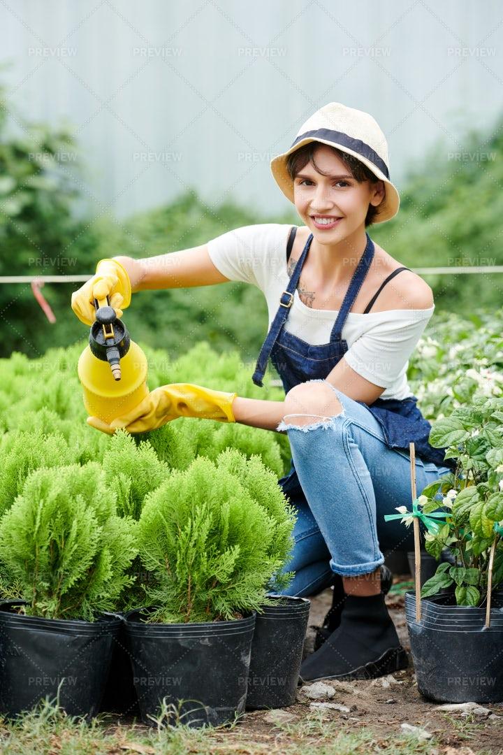 Woman Watering Cypress Plants: Stock Photos
