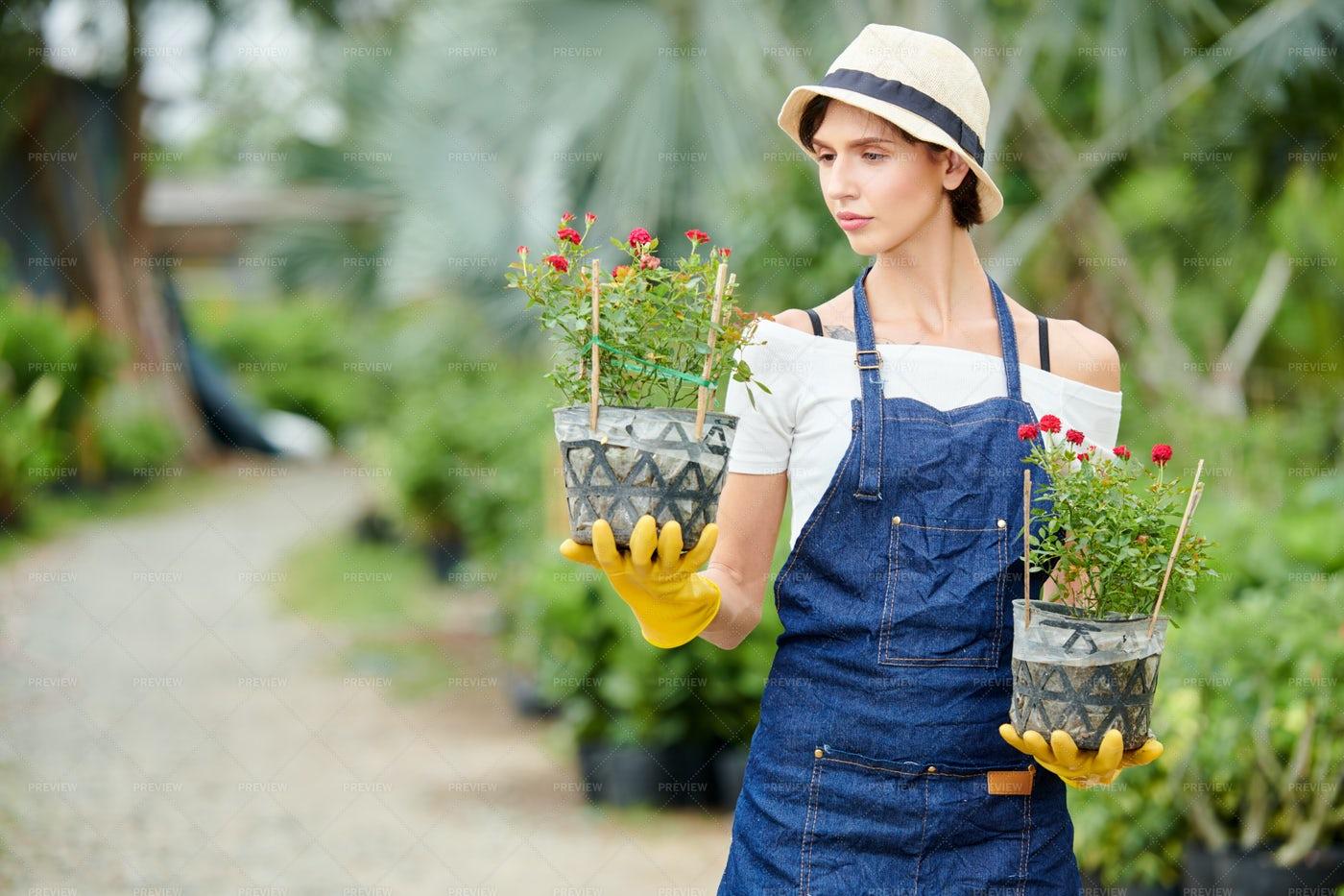 Gardener Looking At Flower Pot: Stock Photos