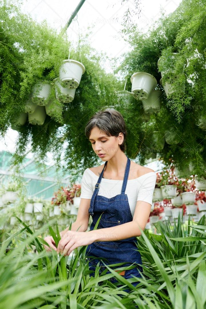 Botanist Working In Greenhouse: Stock Photos