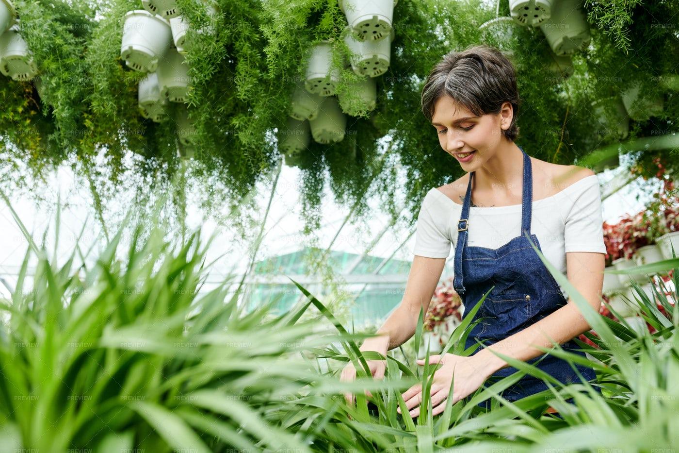 Woman Enjoying Working With Plants: Stock Photos