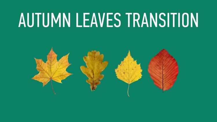 Autumn Leaves Transitions Pack: Stock Motion Graphics