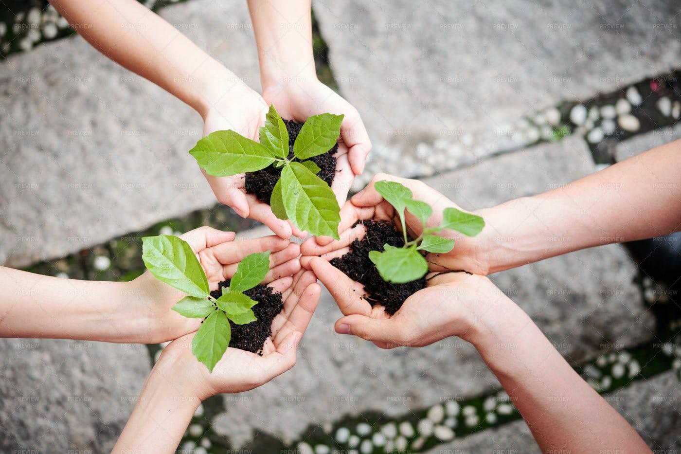 People Plant New Plants: Stock Photos