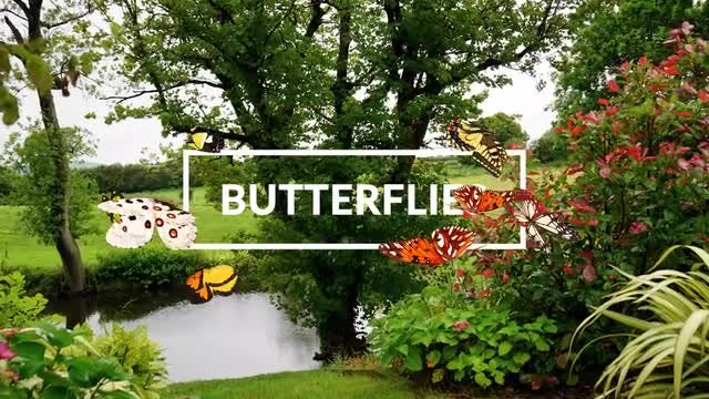 Butterflies: Stock Motion Graphics