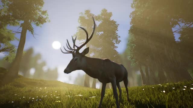 Lonely Deer 2: Stock Motion Graphics