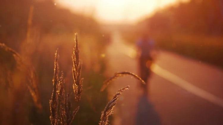 Golden Sunset: Stock Video