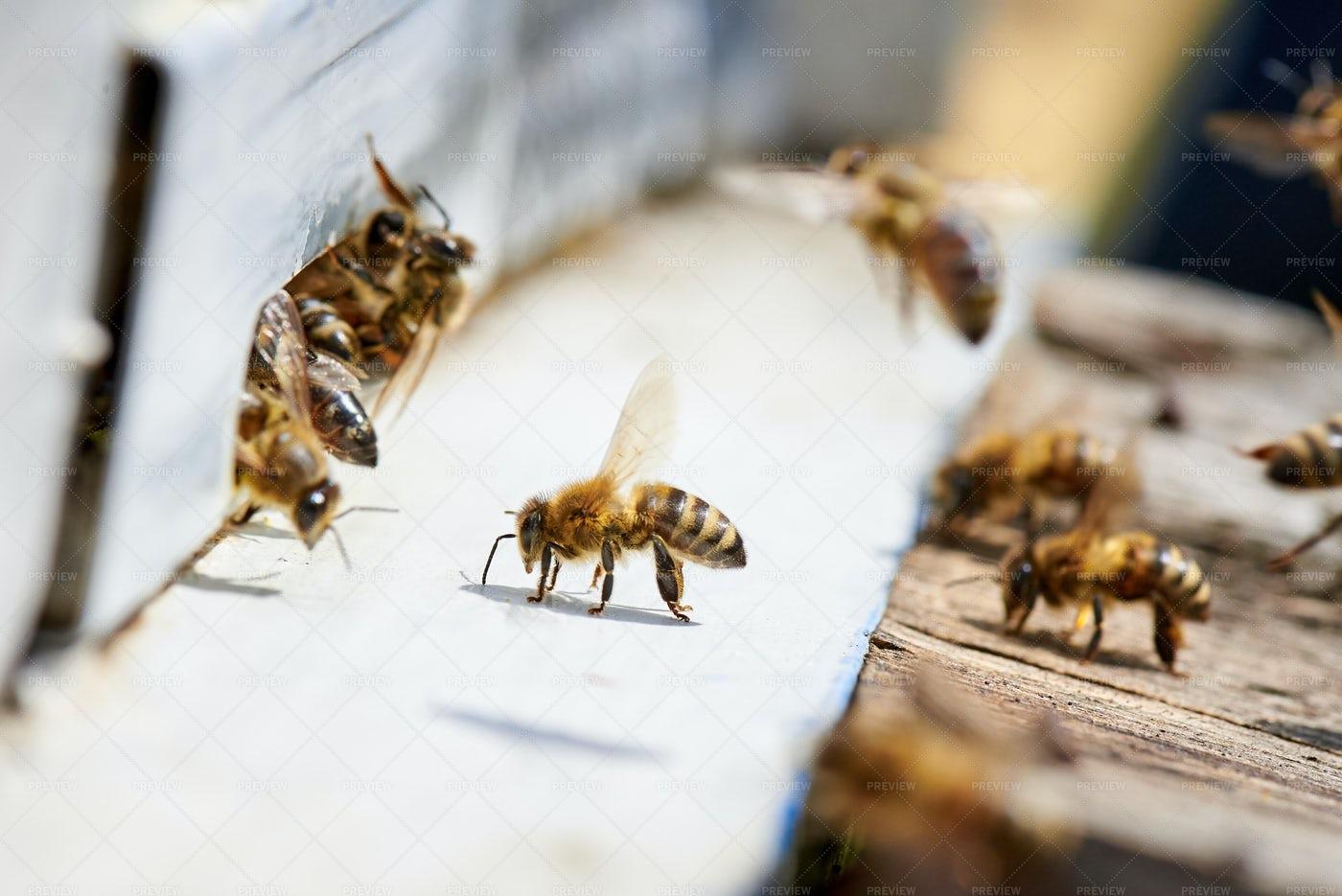 Honey Bees Around Hive: Stock Photos