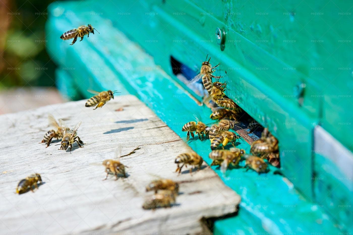 A Busy Bee Hive: Stock Photos