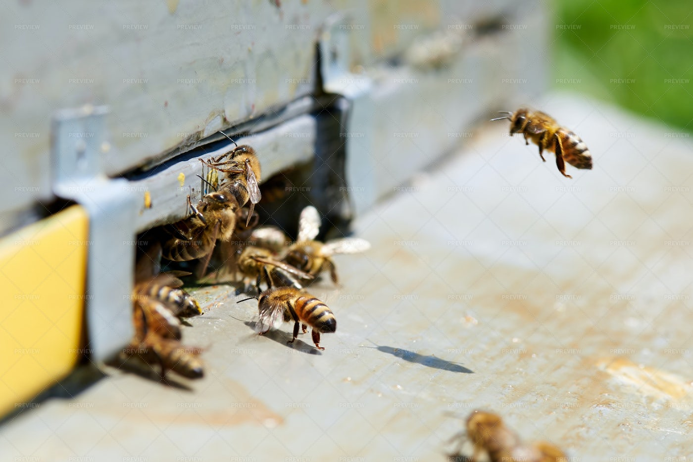 Crawling Into The Hive: Stock Photos