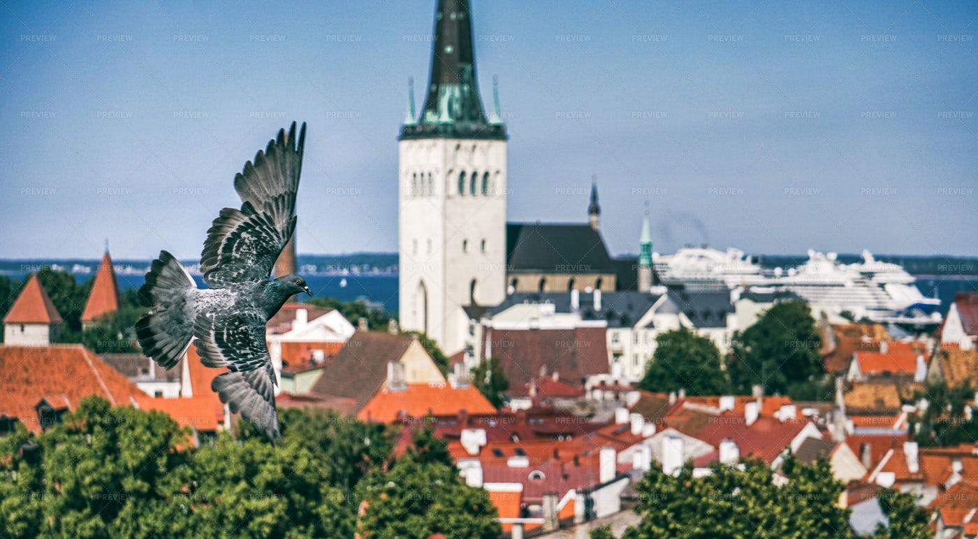 Birds Flying Above Tallinn: Stock Photos