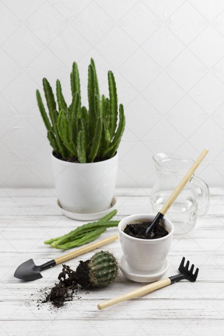 Home Floriculture: Stock Photos