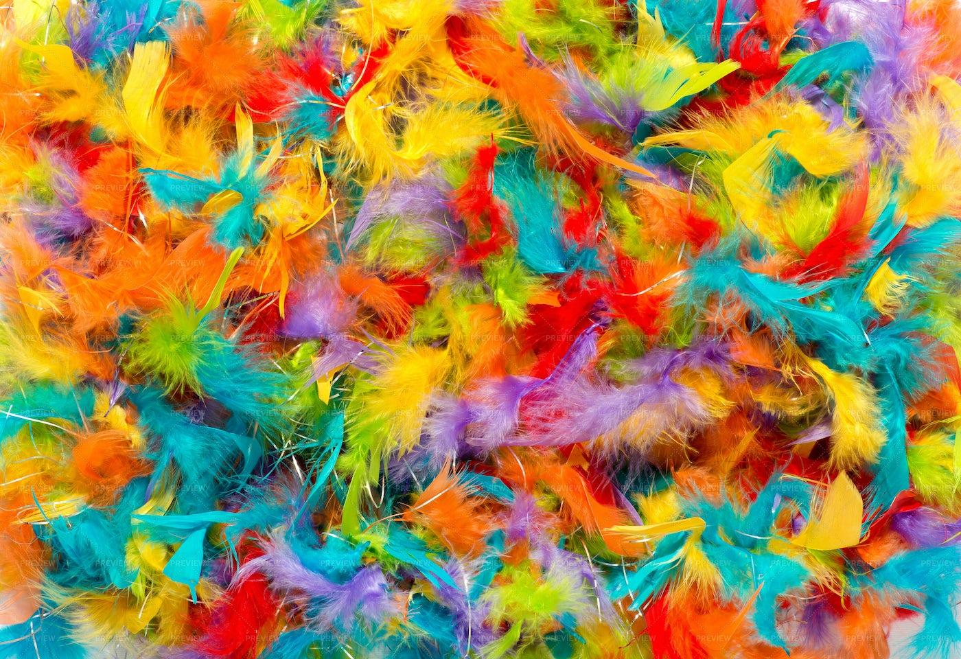 Colorful Feathers: Stock Photos