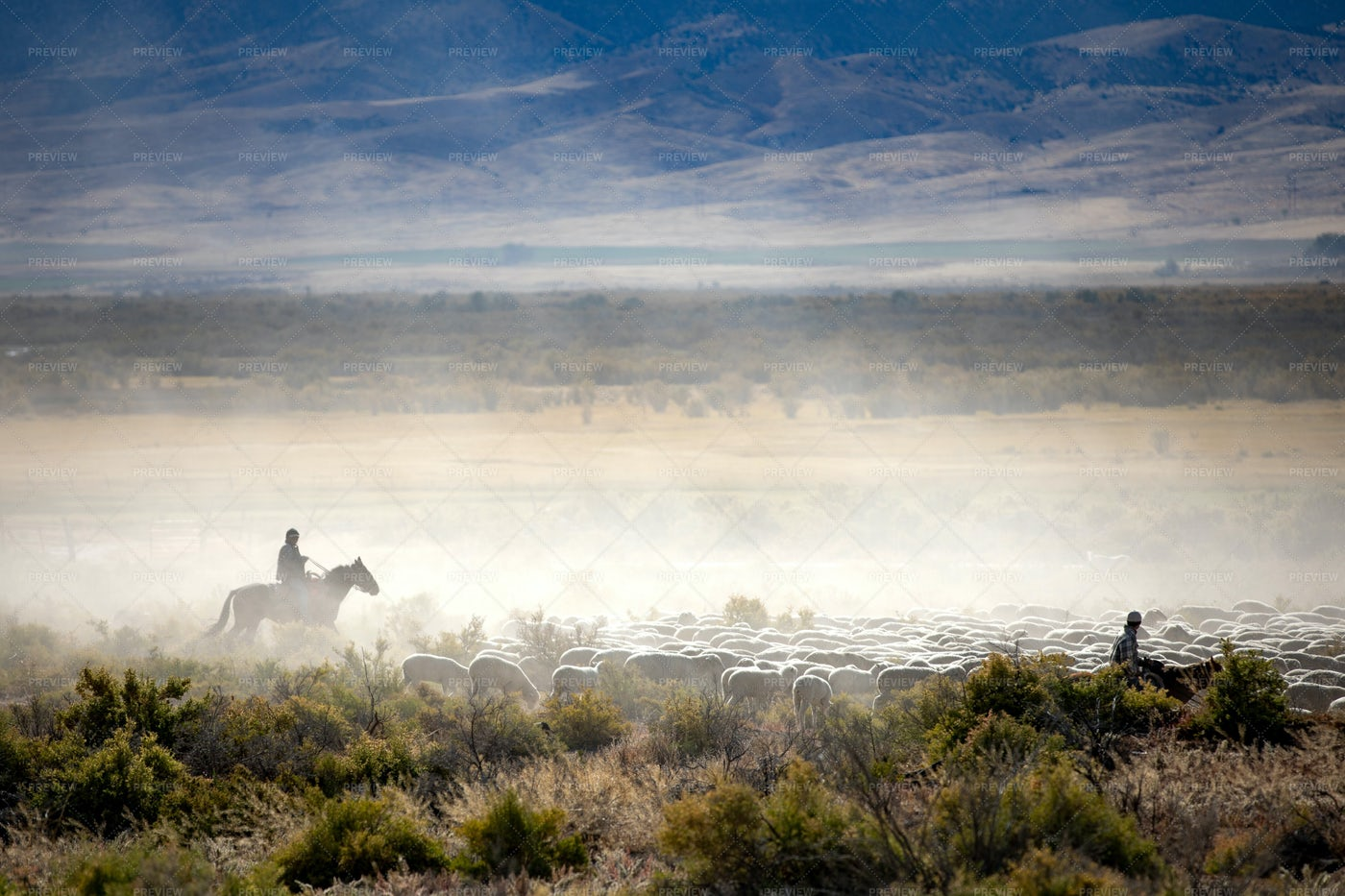 Cowboy In The Mist: Stock Photos