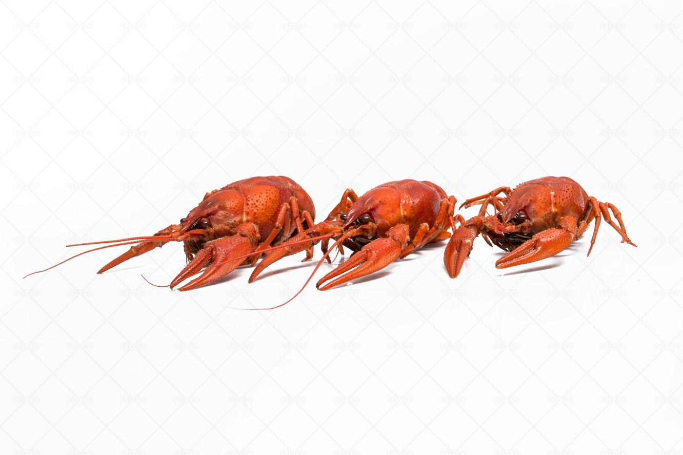 Cooked Crayfish: Stock Photos