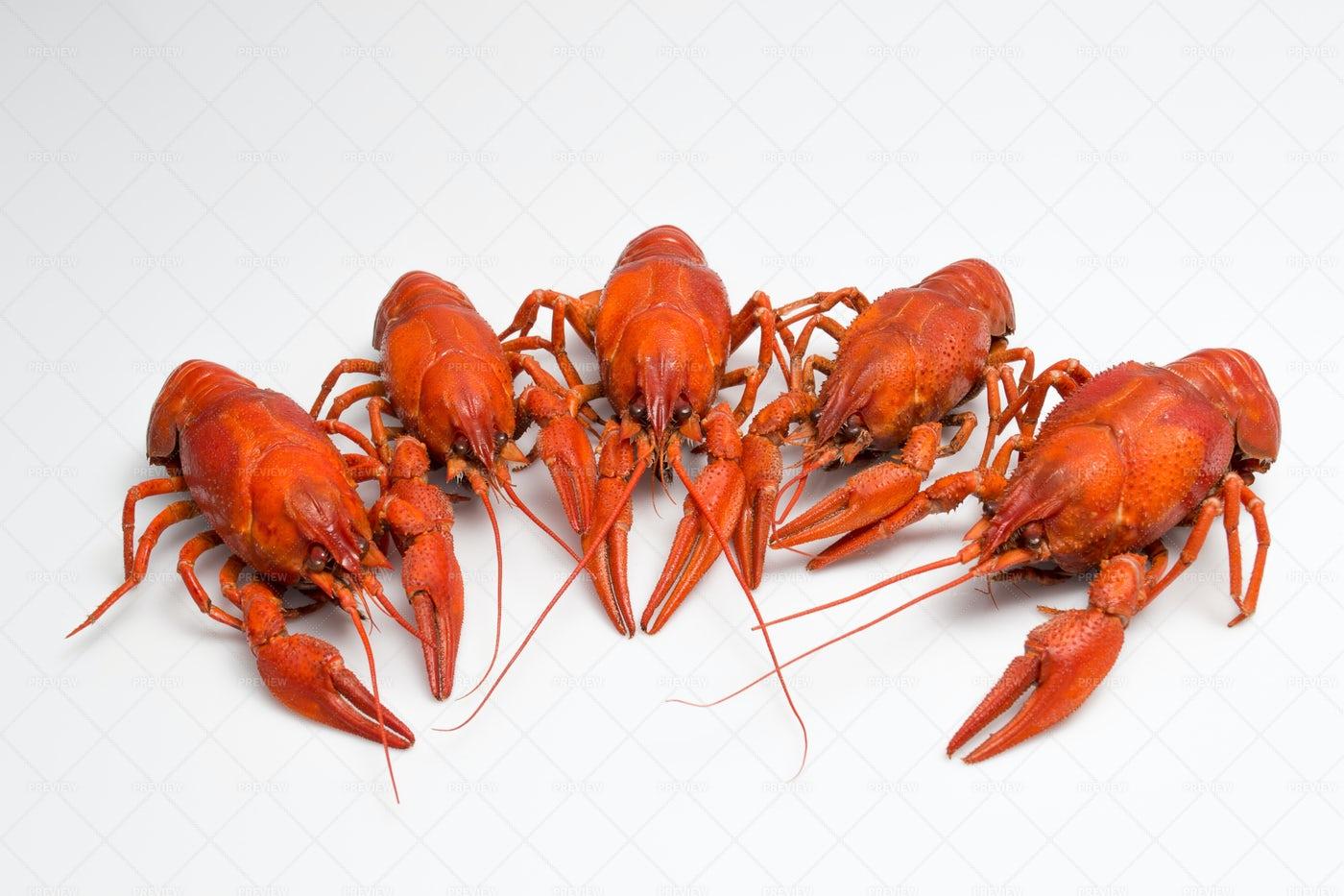 Boiled Crawfish: Stock Photos