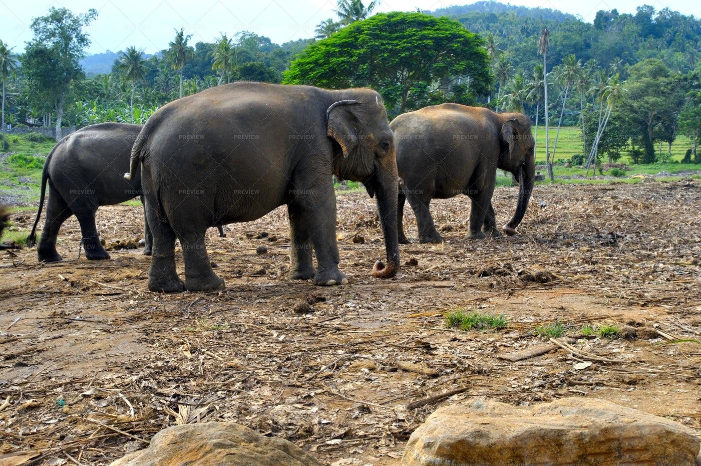 Three  Elephants: Stock Photos
