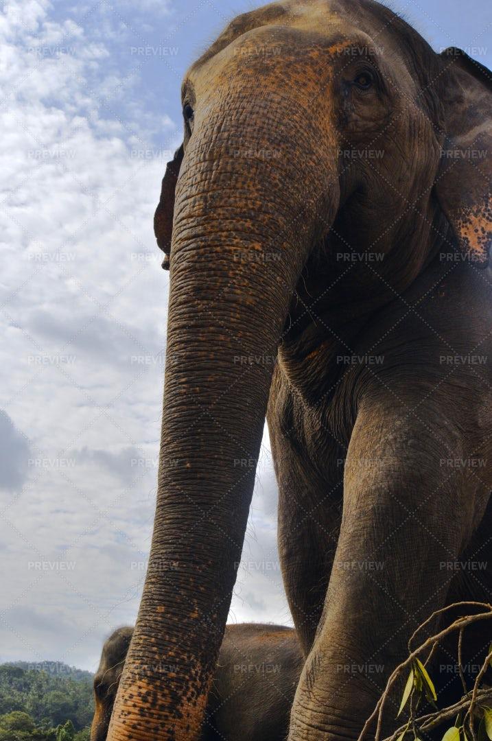 Elephant Portrait: Stock Photos