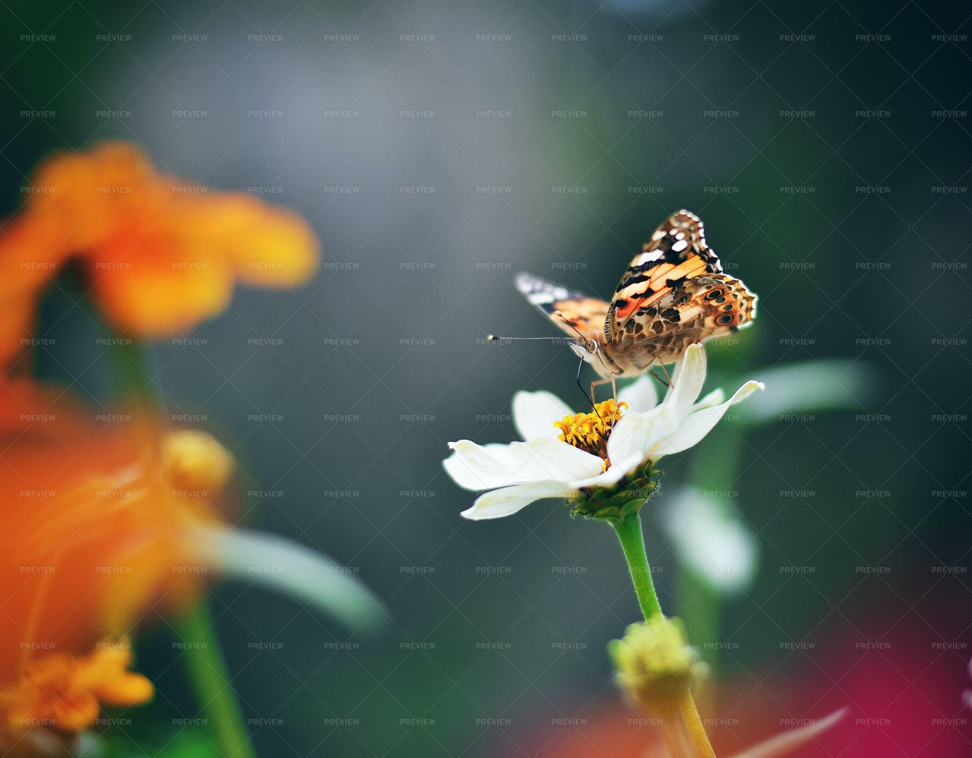 Butterfly On Flower: Stock Photos