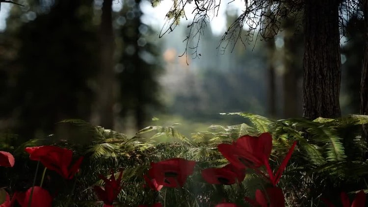 Forest Life 3: Motion Graphics