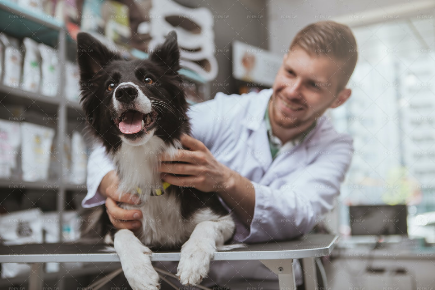 Happy Dog With The Vet: Stock Photos