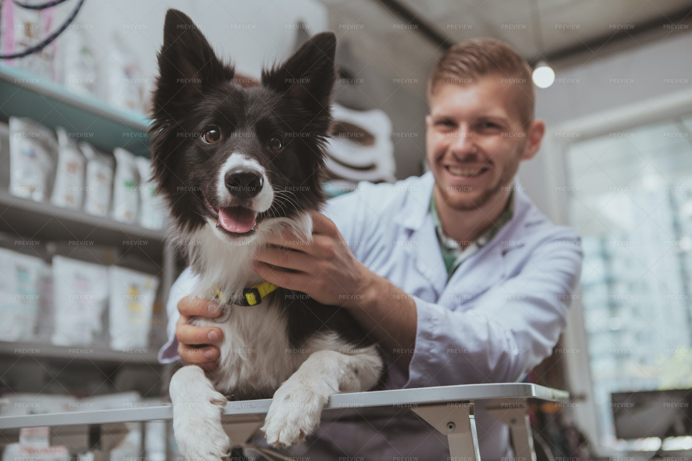 Vet Treats A Dog: Stock Photos