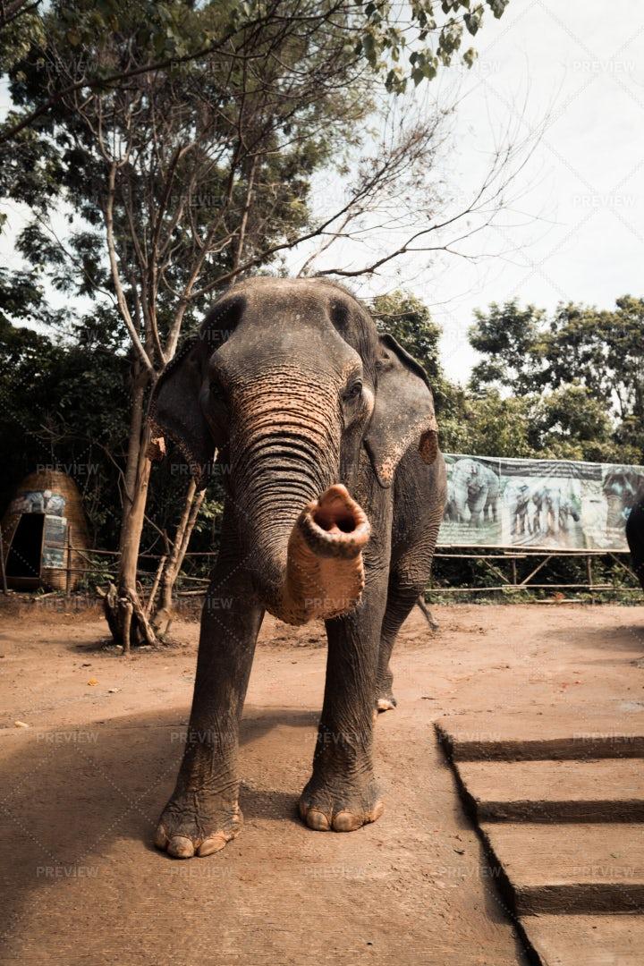 Elephant Sanctuary: Stock Photos
