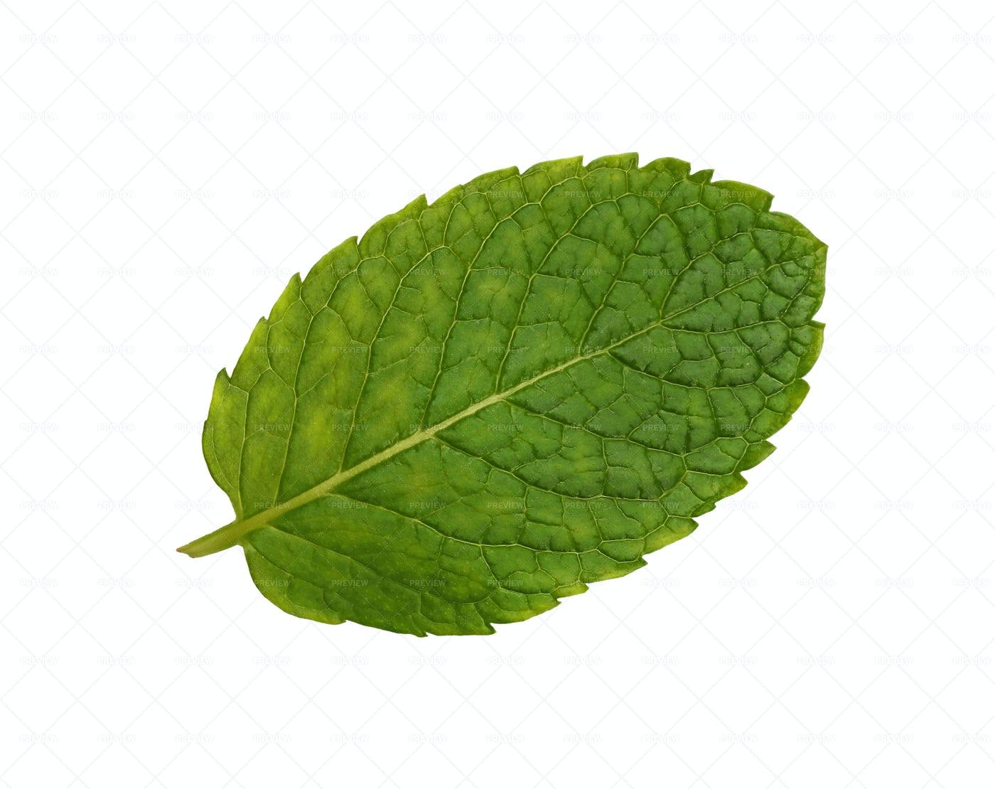 Green Mint Leaf: Stock Photos