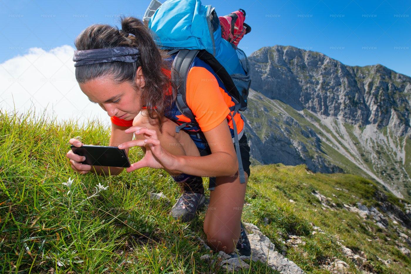 Hiker Capturing A Flower: Stock Photos