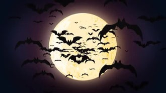 Halloween Bats: Motion Graphics