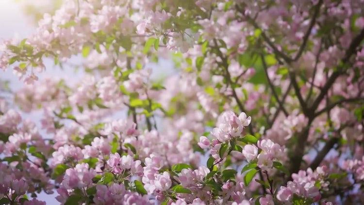 Spring Garden: Stock Video