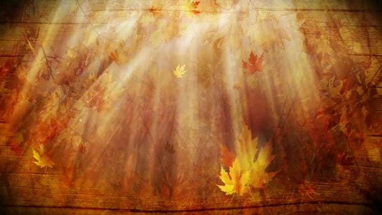 Autumn Foliage Background: Stock Motion Graphics