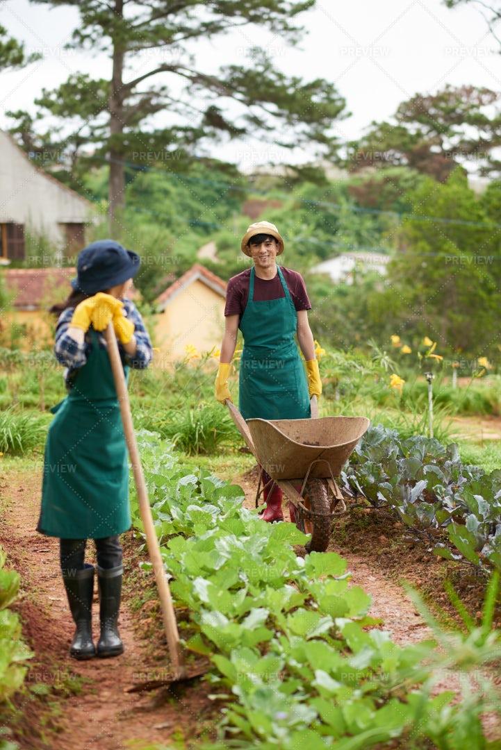 Couple Working In Garden: Stock Photos