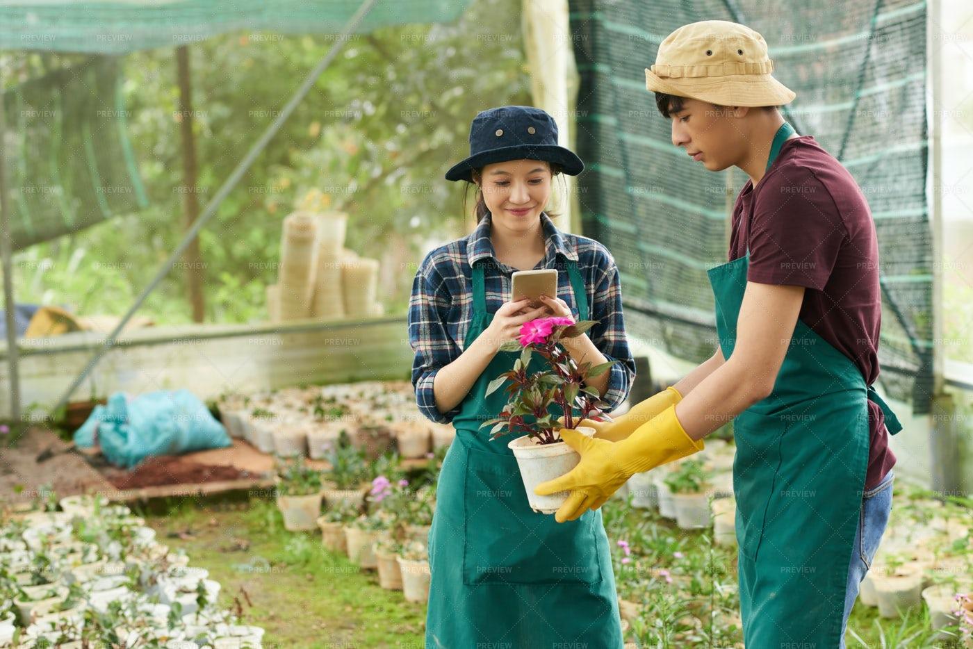 Floriculture: Stock Photos